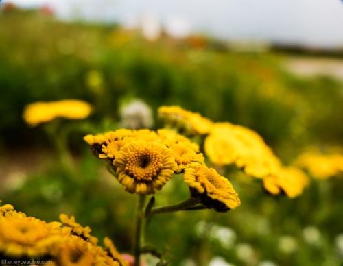 marco_shot_flowers_in_sevanavank_monastery_armenia